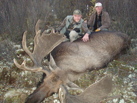 Dad and son; antlers still in velvet.