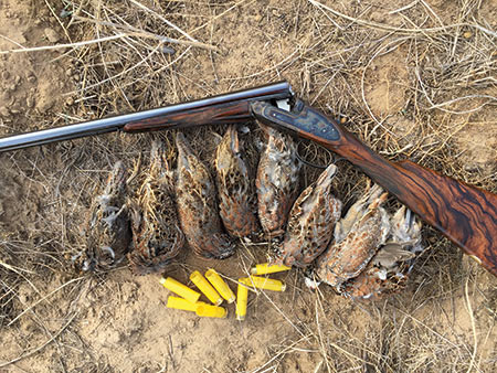 Eight quail is the daily limit in Kansas, but let me make it clear that I did shoot more than eight times with my Purdey side by side.