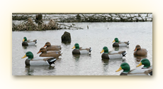 Decoys &amp; Accessories