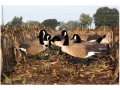 Product detail of Higdon Super Magnum Full Form Active Canada Goose Shell Decoy Pack of 6