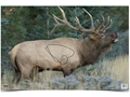 "Product detail of Birchwood Casey Eze-Scorer Elk Targets 23"" x 35"" Pack of 2"