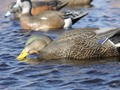 Product detail of GHG Pro-Grade Duck Decoys