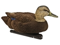 Product detail of Avian-X Topflight Black Duck Weighted Keel Duck Decoy Pack of 6 (3 Drakes, 3 Hens)