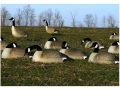 Product detail of Flambeau Storm Front Flocked Head Canada Goose Sleeper/Rester Pack Shell Decoys Pack of 12