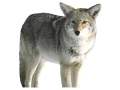 Product detail of Montana Decoy Kojo Coyote Decoy Cotton, Polyester and Steel