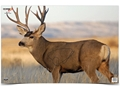 "Product detail of Birchwood Casey Eze-Scorer Mule Deer Targets 23"" x 35"" Package of 2"