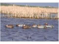 Product detail of GHG Pro-Grade Weighted Keel Green Wing Teal Duck Decoys Harvester Pack of 6