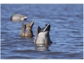 Product detail of GHG Pro-Grade Weighted Keel Mallard Duck Decoys Butt-Up Feeder Pack of 2