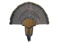 Product detail of H.S. Strut Tail and Beard Turkey Mounting Kit