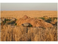 Thumbnail Image: Product detail of Avery Killer Ghillie Layout Blind Cover Kit fits ...