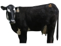Product detail of Montana Decoy Moo Cow Decoy Cotton, Polyester and Steel