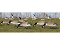 Product detail of Flambeau Storm Front Full Body Feeder Pack Canada Goose Decoys Pack of 6