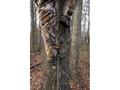 Product detail of Summit SwifTree DTS 22' Treestand Climbing Sticks Steel Brown