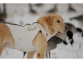 Thumbnail Image: Product detail of Avery Sporting Dog Standard Dog Vest Neoprene