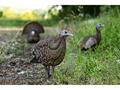 Product detail of Avian-X LCD Breeder Hen Collapsible Turkey Decoy
