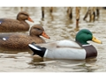 Product detail of Flambeau Storm Front Weighted Keel Mallard Duck Decoy Pack of 12