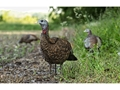 Product detail of Avian-X LCD Lookout Hen Collapsible Turkey Decoy