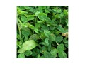 Thumbnail Image: Product detail of Biologic Premium Perennial Food Plot Seed