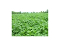 Product detail of Biologic Non-Typical Clover Perennial Food Plot Seed