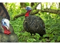 Product detail of Avian-X LCD Quarter Strut Jake Turkey Decoy