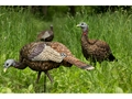 Product detail of Avian-X Lookout Hen Collapsible Turkey Decoy