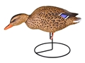 Thumbnail Image: Product detail of Flambeau Storm Front Full Body Mallard Duck Decoy...