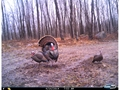 Thumbnail Image: Product detail of Cuddeback Long Range Infrared Game Camera 20 MP B...