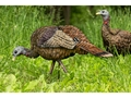 Product detail of Avian-X LCD Feeder Hen Collapsible Turkey Decoy