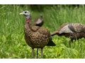 Product detail of Avian-X LCD Lookout Hen Turkey Decoy