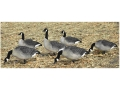 Dakota Decoys Fully Flocked XFD X-Treme Canada Goose Decoys Pack of 6