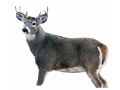 Montana Decoy Buck Deer Decoy Cotton, Polyester and Steel