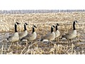 Avian-X Flocked Honker Sentry Full Body Goose Decoy Pack of 6