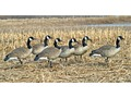 Avian-X Flocked Honker Walkers Full Body Goose Decoy Pack of 6