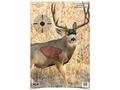 """Birchwood Casey PREGAME 16-1/2"""" x 24"""" Mule Deer Target Package of 3"""