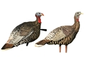 Avian-X LCD Merriam Hen Lookout and Jake Turkey Decoy Combo