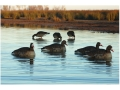 GHG Pro-Grade Life-Size Weighted Keel Specklebelly Goose Decoys Harvester Pack of 6