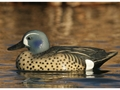 GHG Life-Size Blue-Winged Teal Duck Decoy Pack of 6