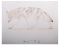 Product detail of NRA Official Lifesize Game Target Coyote Paper Package of 25