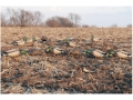GHG Pro-Grade Full Body Mallard Duck Decoys Feeder Pack of 6