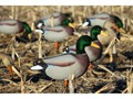 Dakota Decoys X-Treme Full Body Mallard Duck Decoys Pack of 6