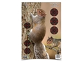 "Birchwood Casey PREGAME 12"" x 18"" Squirrel Target Package of 8"