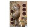 "Birchwood Casey PREGAME 12"" x 18"" Squirrel Target Package of 8"