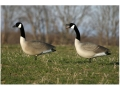 Product detail of Flambeau Storm Front Full Body Upright Pack Canada Goose Decoys Pack of 4