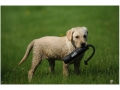 "Avery 2"" Canvas Bumper Dog Training Dummy"