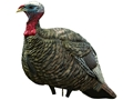 Avian-X Quarter Strut Jake Inflatable Turkey Decoy