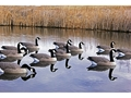 DOA Rogue Series Canada Goose Floater Decoy Pack of 6