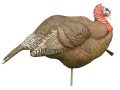 H.S. Strut Woody Turkey Decoy Polymer