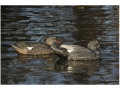 GHG Life-Size Weighted Keel Gadwalll Duck Decoys Pack of 6