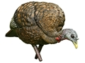 Avian-X Feeder Hen Inflatable Turkey Decoy