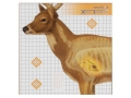 "Champion XRay Deer Target 25"" x 25"" Package of 6"